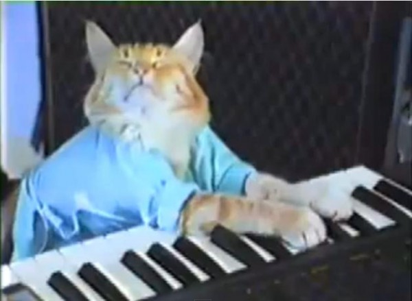 chat_piano_lolcat